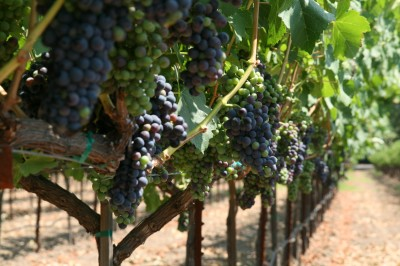 wineries & Semi-private tours in Sonoma