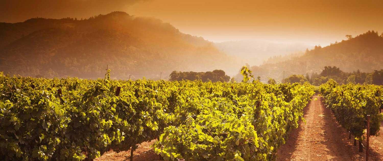 Napa Valley Wine Tours Max Napa Tours